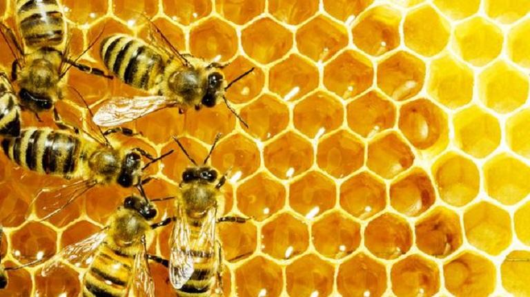 the home od honey