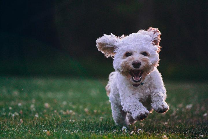 dog-bark-29.jpg