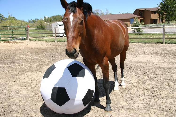 horse-toys.jpg