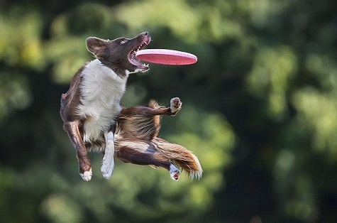 Dog-and-Frisbee-Featured.jpg