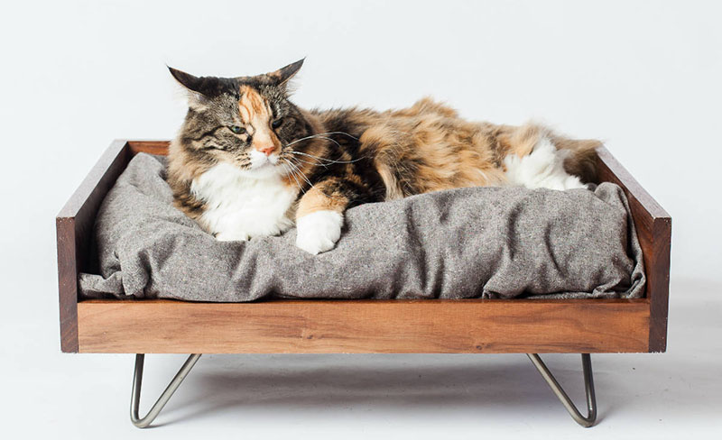 cat-beds.jpg
