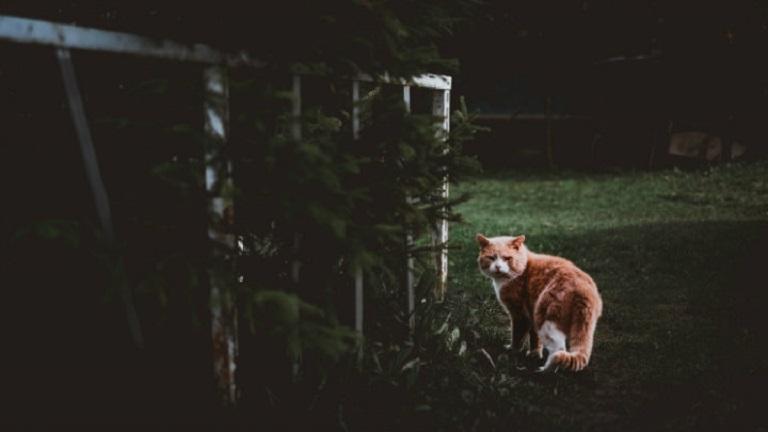 cat-running-from-animal-repeller.jpg