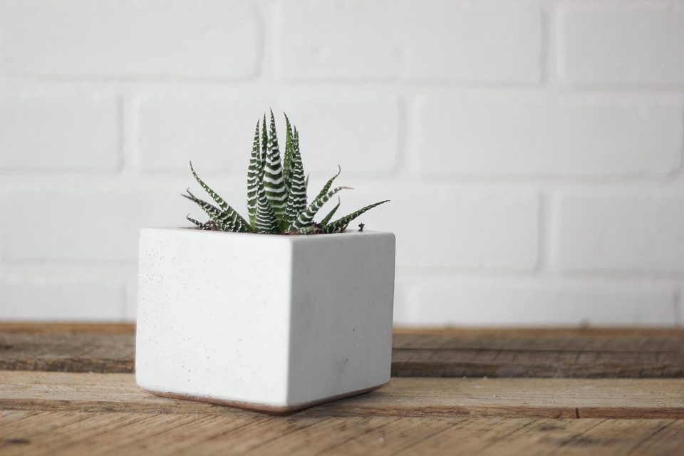 Concret-Pots-16-960x640.jpg