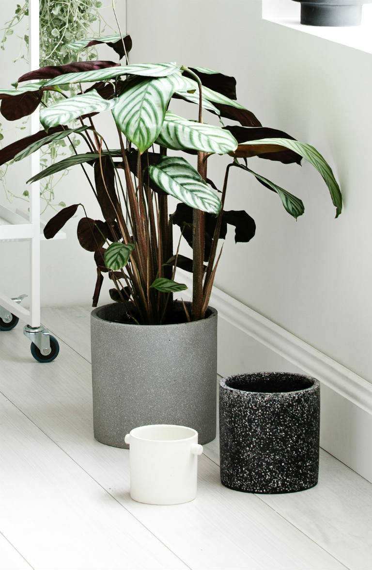 beautiful concrete plant pots