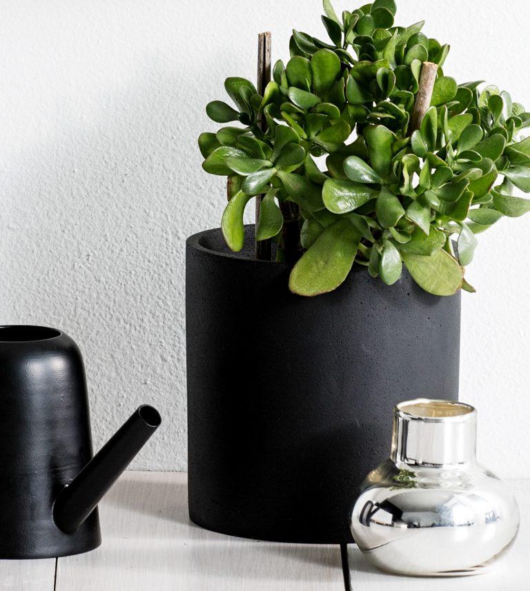 black concrete plant pots