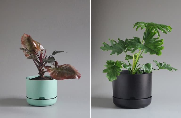 plants-in-self-watering-pots.jpg