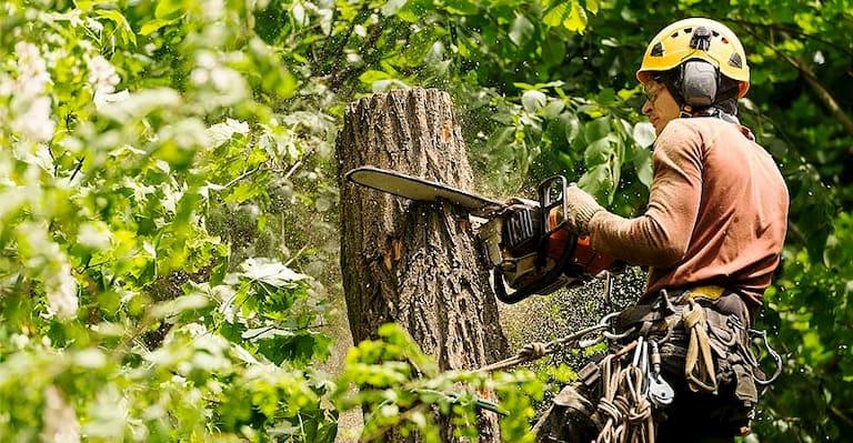 professional arborist cutting a tree