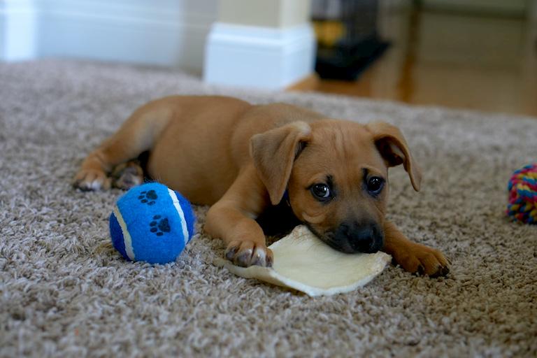 dog and his ball
