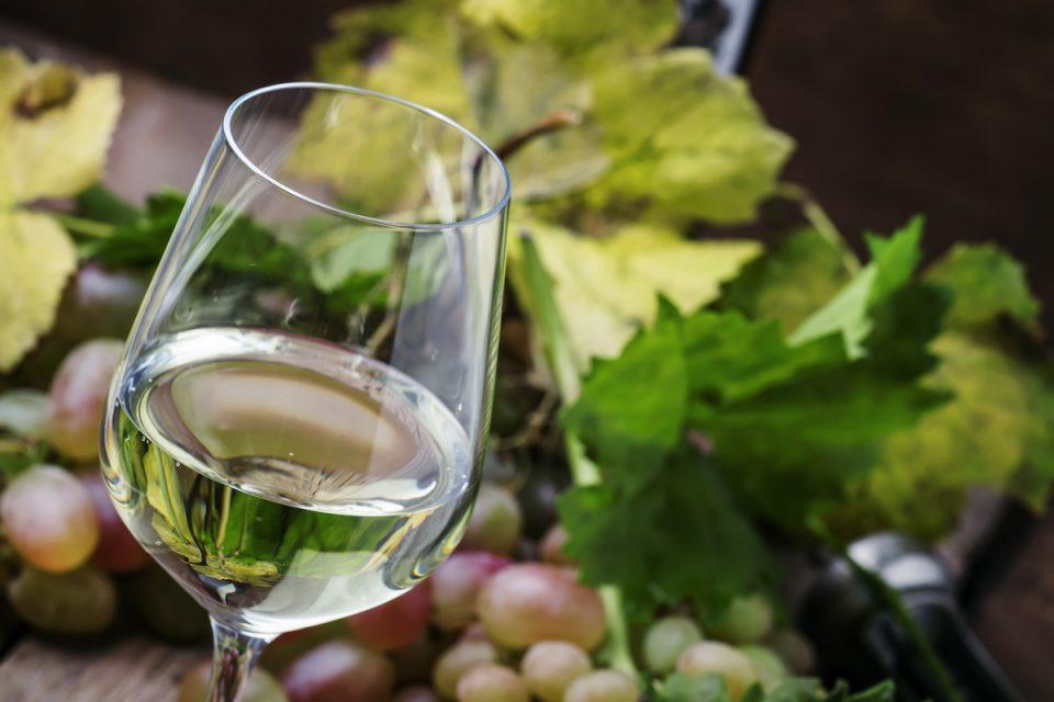 sauvignon blanc wine grapes